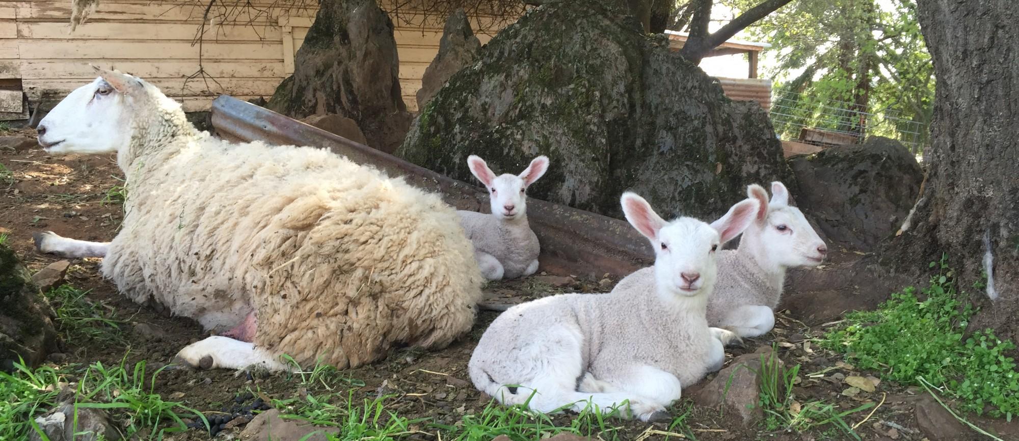 Four Tines Farm & Farm Stand
